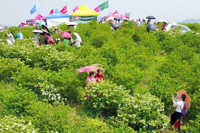 江西乐平举行首届栀子花·白茶乡村文化旅游节